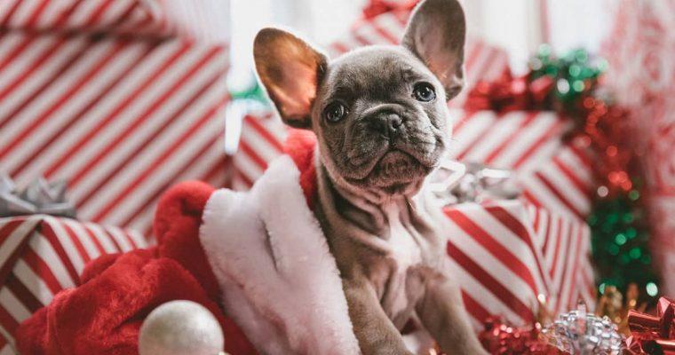 Pomysły na prezenty dla zwierzolubów